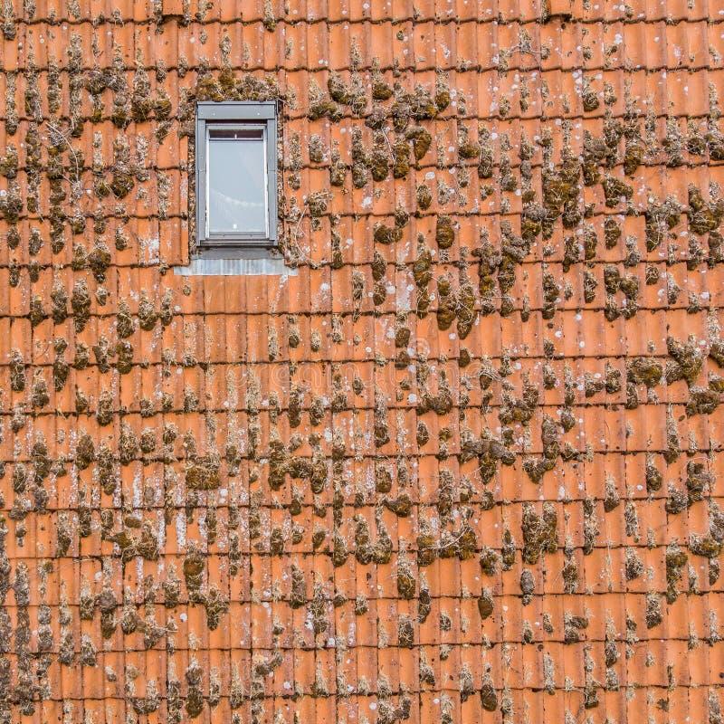 A inspeção do telhado telhado vermelho de uma casa unifamiliar, a inspeção da condição das telhas e uma inclinação telham a janel imagem de stock