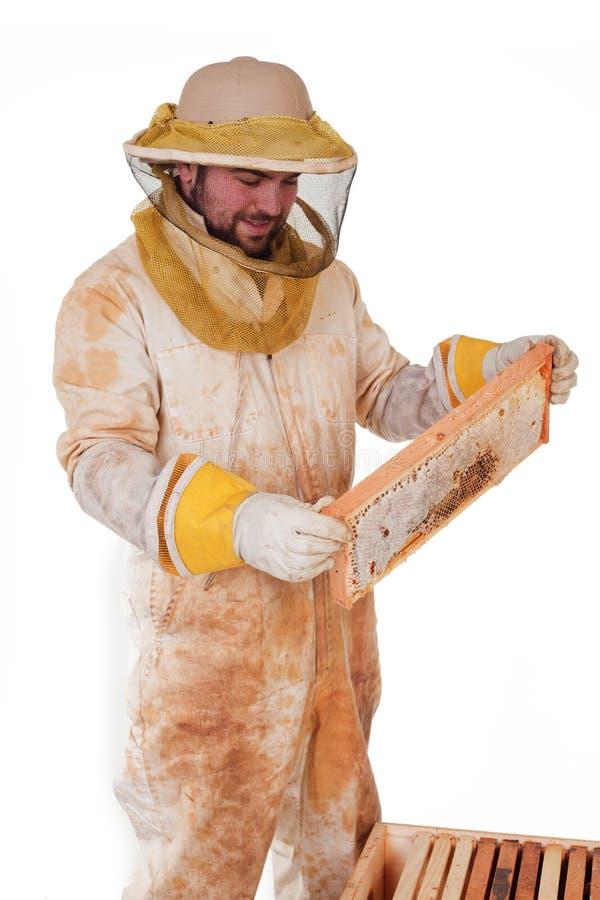 Inspecting The Honey royalty free stock photos