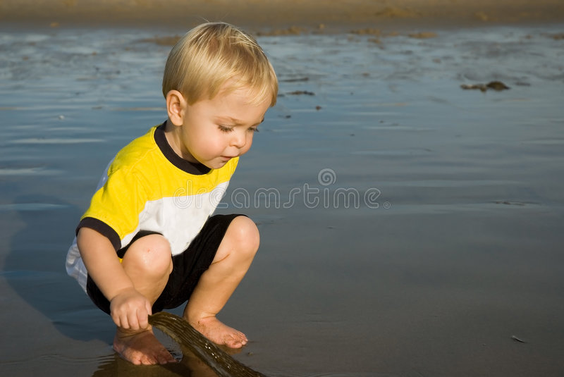 Download Inspecting seaweed stock image. Image of pail, shore, play - 2245767