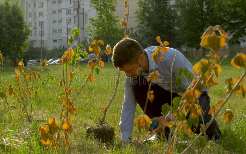 Inspector cheking root system of the bush. Ecological inspector cheking root system of the bush. Irresponsibility of park workers stock photos