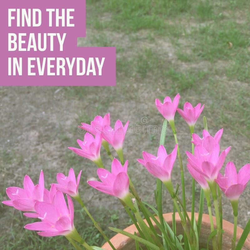 Inspiracyjny motywacyjny wycena ` znajduje piękno w codziennym ` fotografia royalty free
