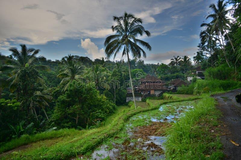 Inspirating Indonésia exótica com ilha bonita Bali fotografia de stock royalty free