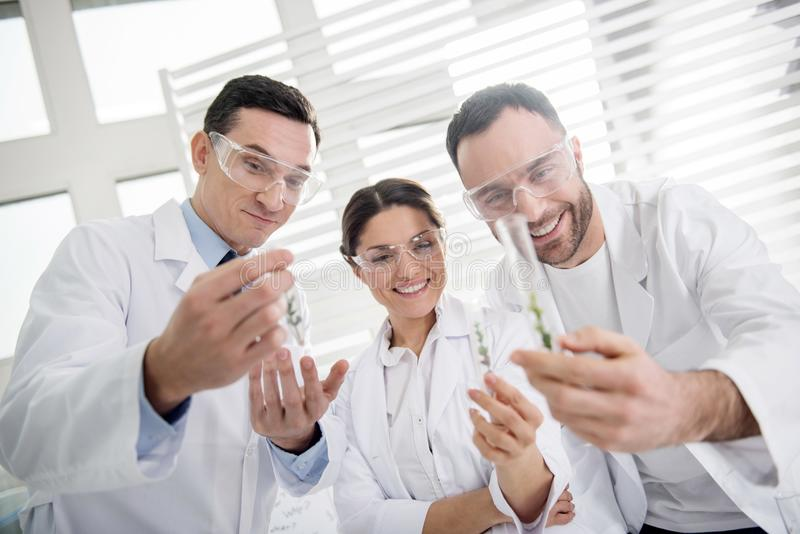 Exuberant scientists looking at test tubes. Inspiration. Content professional experienced scientists smiling and wearing uniforms and holding test tubes stock photos