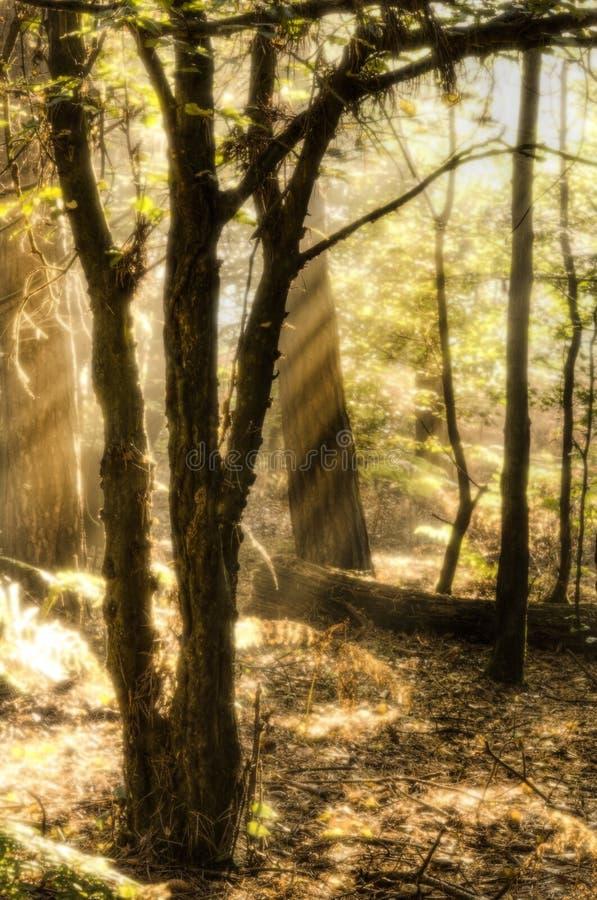 Inspirational dageraadzon die door bomen is gebarsten royalty-vrije stock afbeelding