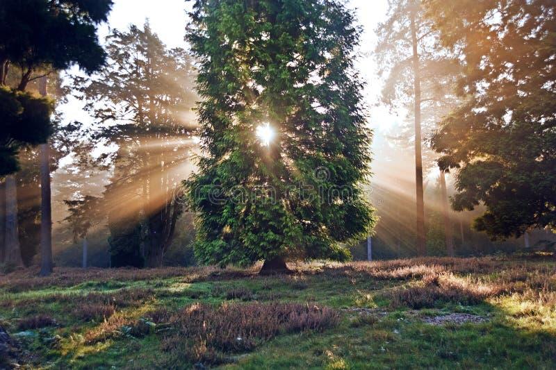 Inspirational dageraadzon die door bomen is gebarsten stock foto's
