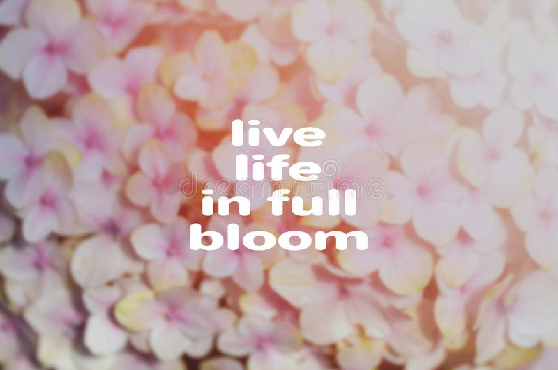 Life quotes - Live life in full bloom stock photos