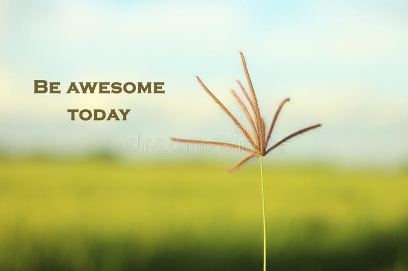 Inspirational motivational quote-be awesome today. With morning light touch the single grass flower. Blurry soft dreamy paddy royalty free stock image
