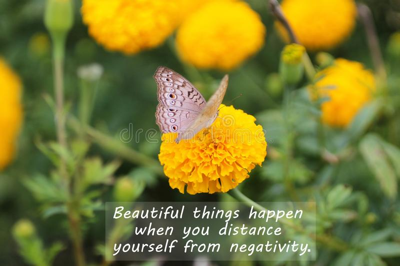 Inspirational motivational quote - Beautiful things happen when you distance yourself from negativity. With butterfly on yellow marigold flower in the garden royalty free stock images