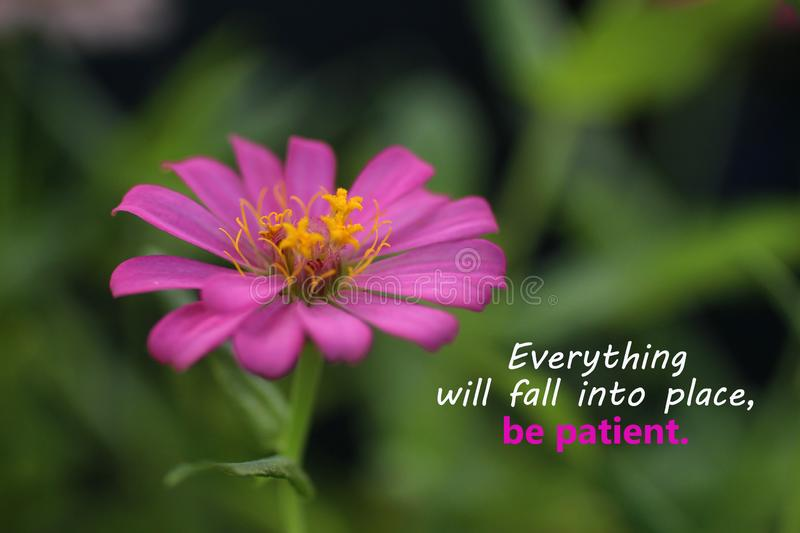 Inspirational motivational quote - Everything will fall into place. Be patient. With beautiful zinnia flower blossom closeup. Words of wisdom with nature royalty free stock photography