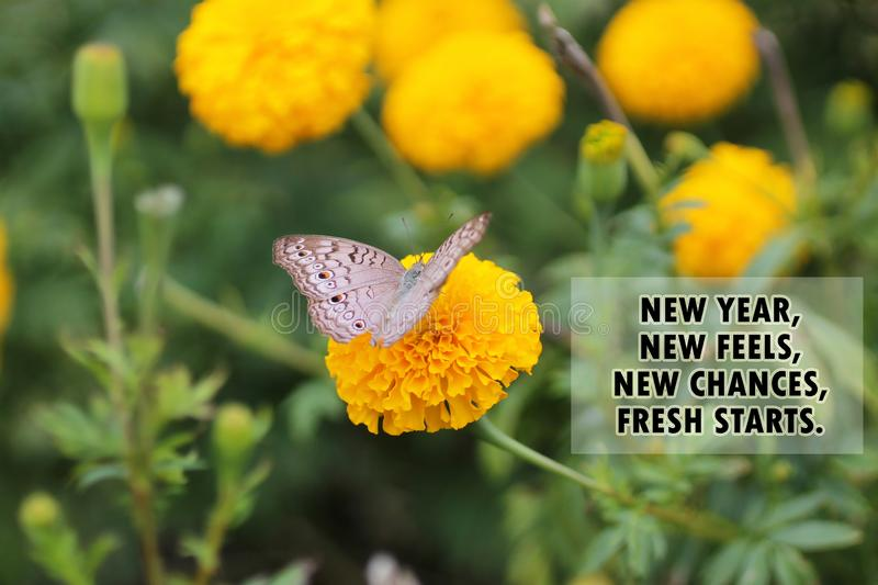 Inspirational motivational quote - New year, new feels, new chances, fresh starts. With butterfly on marigold flower background . royalty free stock photos