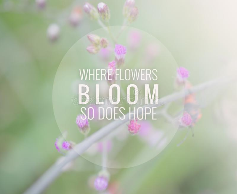 Inspirational and moyivation quote on blurred grass flower background background royalty free stock photography
