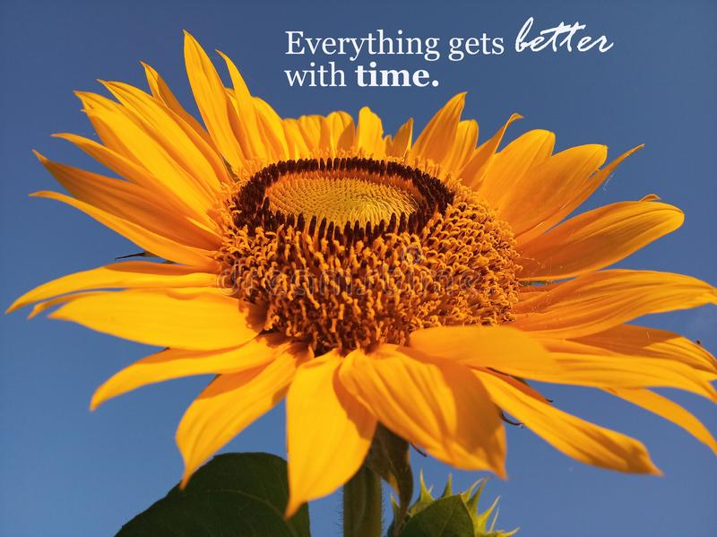 Inspirational quote- Everything gets better with time. With beautiful smiling sunflower blossom closeup. Blue sky background stock photo