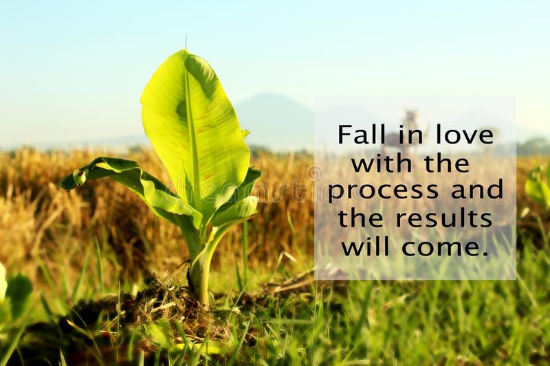 Inspirational quote - Fall in love with the process and the results will come. With baby banana tree growth in the field as. Illustration. Rural paddy field stock photography