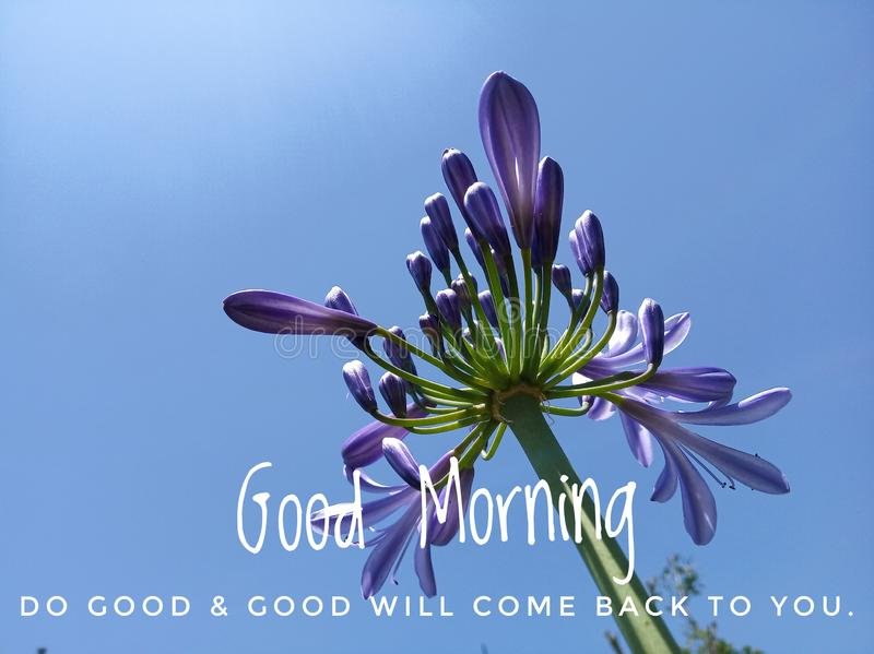 Inspirational quote - Good morning. Do good & good will come back to you. With beautiful purple tulip flowers head blossom on royalty free stock photography