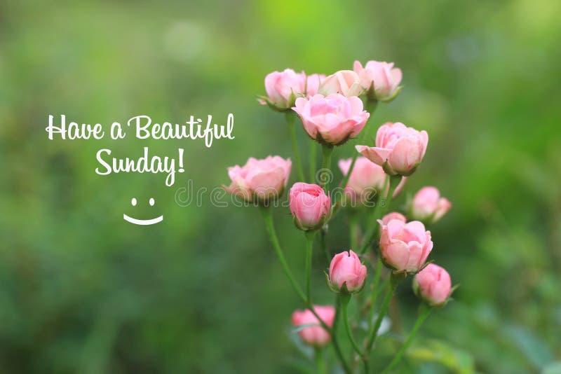 Sunday Quotes Stock Photos - Download 33 Royalty Free Photos