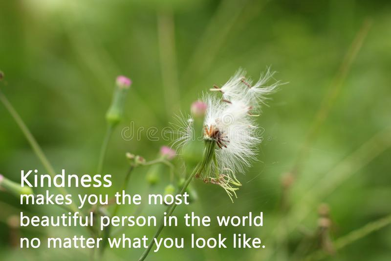 Inspirational words - Kindness makes you the most beautiful person in the world, no matter what you look like. Inspirational quote - Kindness makes you the most stock photos