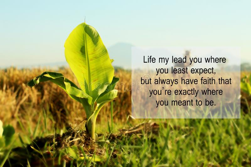Inspirational quote - Life may lead you where you least expect, but always have faith that you are exactly where you meant to be. With baby banana tree growth royalty free stock photo