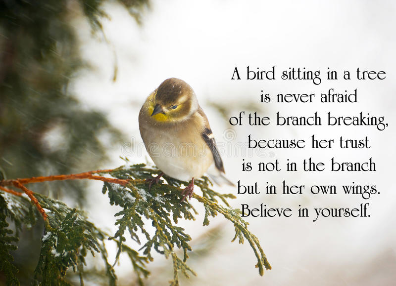 Inspirational quote. On life with a pretty goldfinch perched on a branch in winter