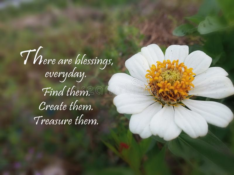 Inspirational quote- There is blessings, everyday. Find them. Create them. Treasure them. With beautiful white  single Sinnia royalty free stock image