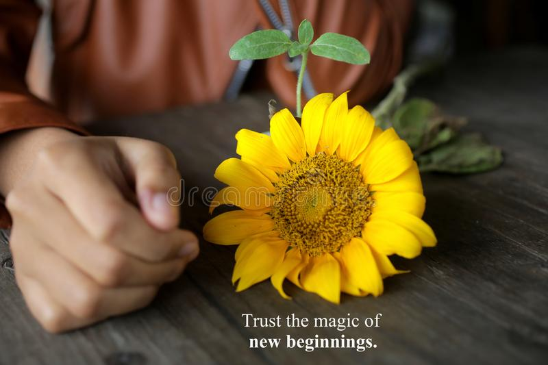 Inspirational quote - trust the magic of new beginnings. With young woman hand, yellow sunflower blossom and its plant. Inspirational quote - trust the magic of stock images