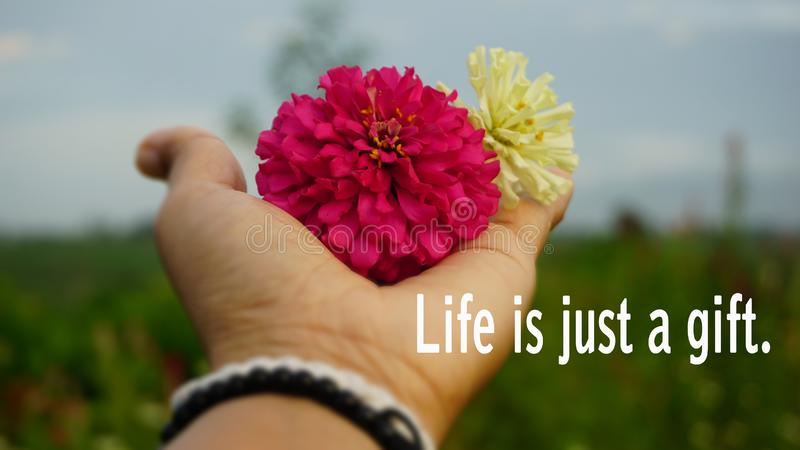 Life Inspirational words - Life is just a gift.  With two flowers in hand. Blessings concept royalty free stock photography