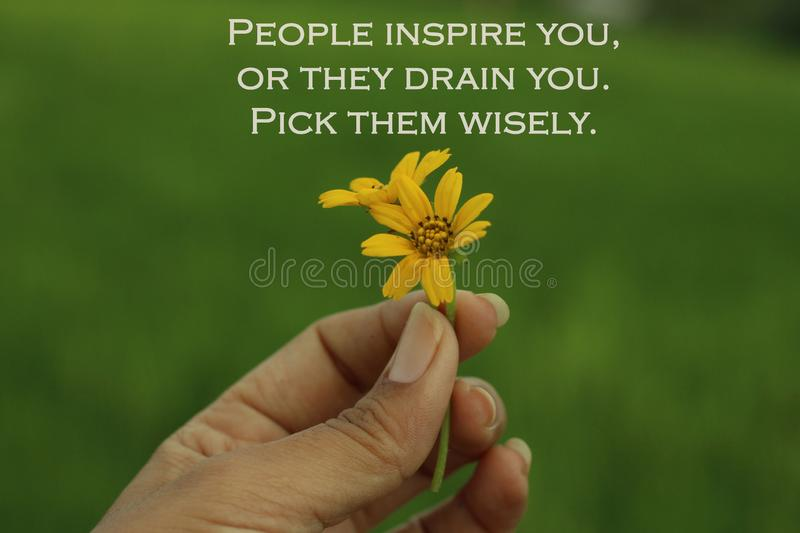 Inspirational words - People inspire you, or they drain you. Pick them wisely. With two beautiful little daisy flowers in hand. stock image