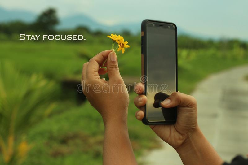 Inspirational words - Stay focused. With smartphone photographer at work creating concept with flowers. royalty free stock photography