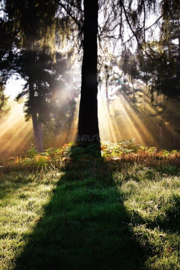 Inspirational zonnestraal door bomen in bos royalty-vrije stock fotografie
