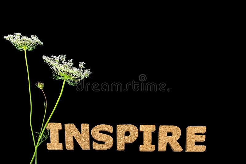 Inspire a flor branca do texto no preto imagem de stock royalty free