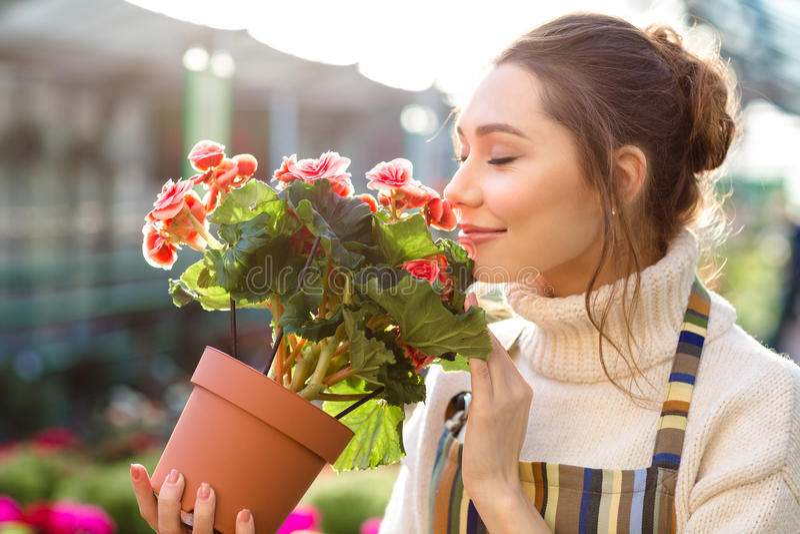 Inspirerad kvinnablomsterhandlare som luktar blommor av begonian i växthus fotografering för bildbyråer