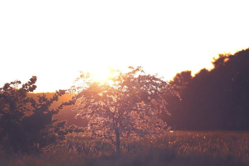 Inspirerande blommande litet träd i ljust soligt panelljus på härlig gryning - tonade färger royaltyfri fotografi