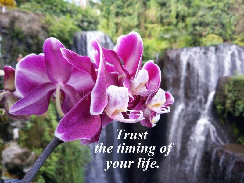Inspirerande citationsteckenförtroende tajmingen av ditt liv Med den härliga purpurfärgade orkidén och oskarp naturvattenfallbakg royaltyfria bilder
