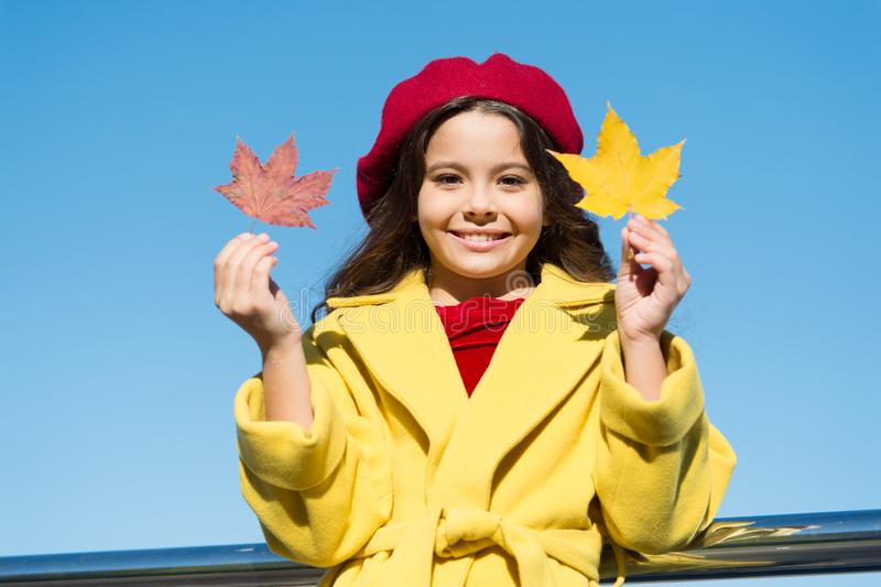 Inspiring fall. Ideas for autumn leisure. Little girl adore autumn season. Kid hold maple leaves. Small girl wear fall royalty free stock image