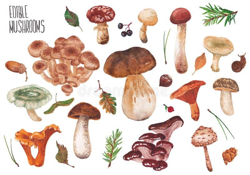 inställda ätliga champinjoner stock illustrationer