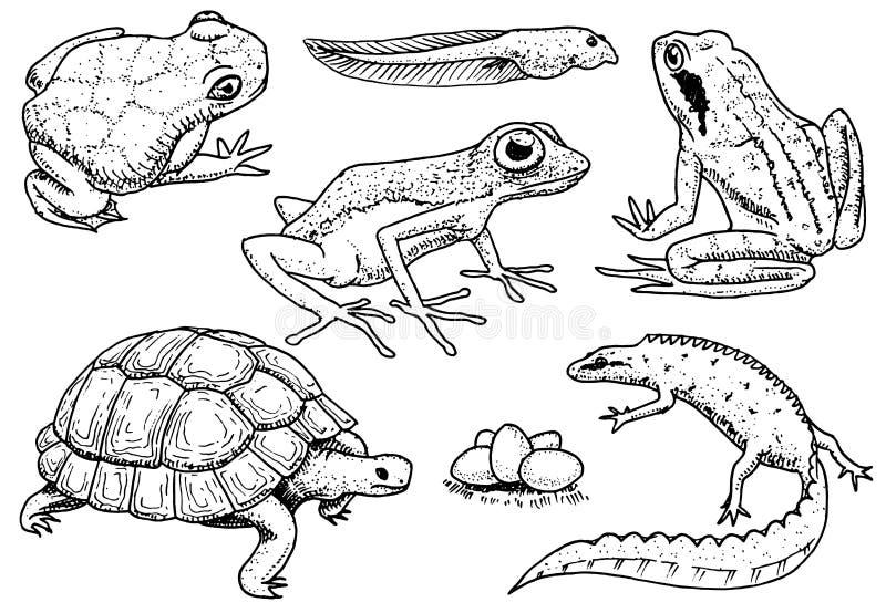 inställda amfibiereptilar Älsklings- och tropiska djur Djurliv och grodor, ödla och sköldpadda, kameleont och anuran vektor illustrationer