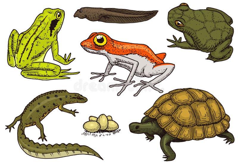 inställda amfibiereptilar Älsklings- och tropiska djur Djurliv och grodor, ödla och sköldpadda, kameleont och anuran royaltyfri illustrationer