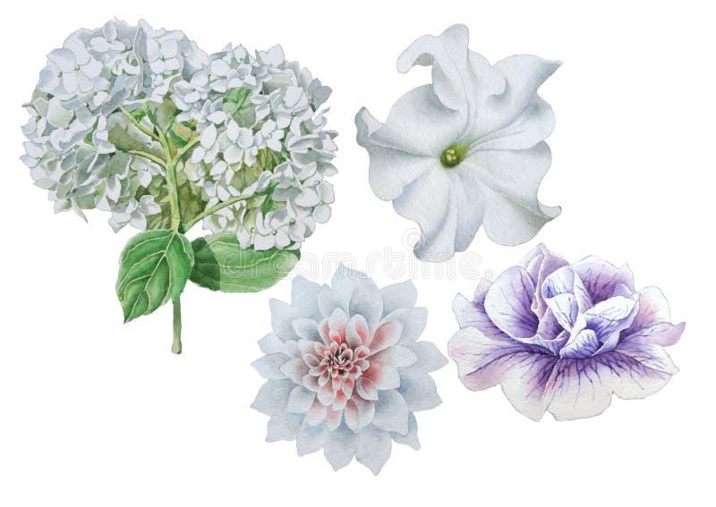 inställda blommor petunia dahlia Hudrangeya för flygillustration för näbb dekorativ bild dess paper stycksvalavattenfärg stock illustrationer