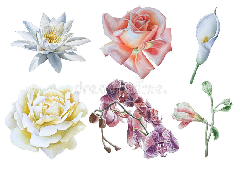 inställda blommor Steg lilja calla Orkidé för flygillustration för näbb dekorativ bild dess paper stycksvalavattenfärg vektor illustrationer