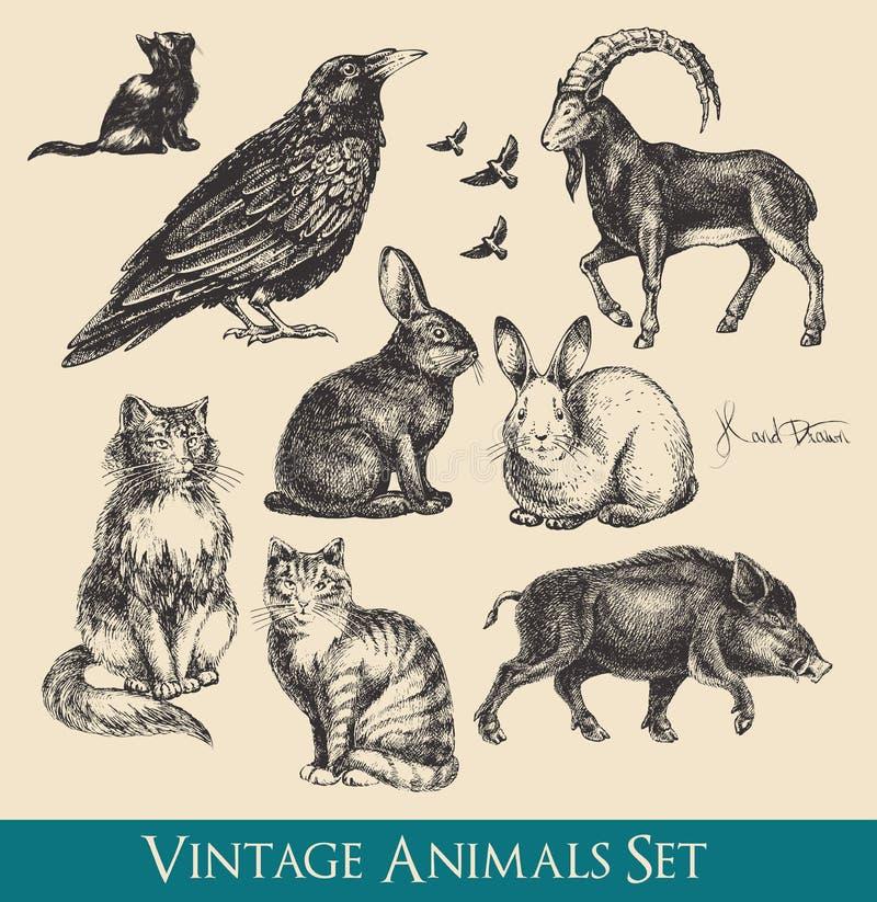 inställda djur vektor illustrationer