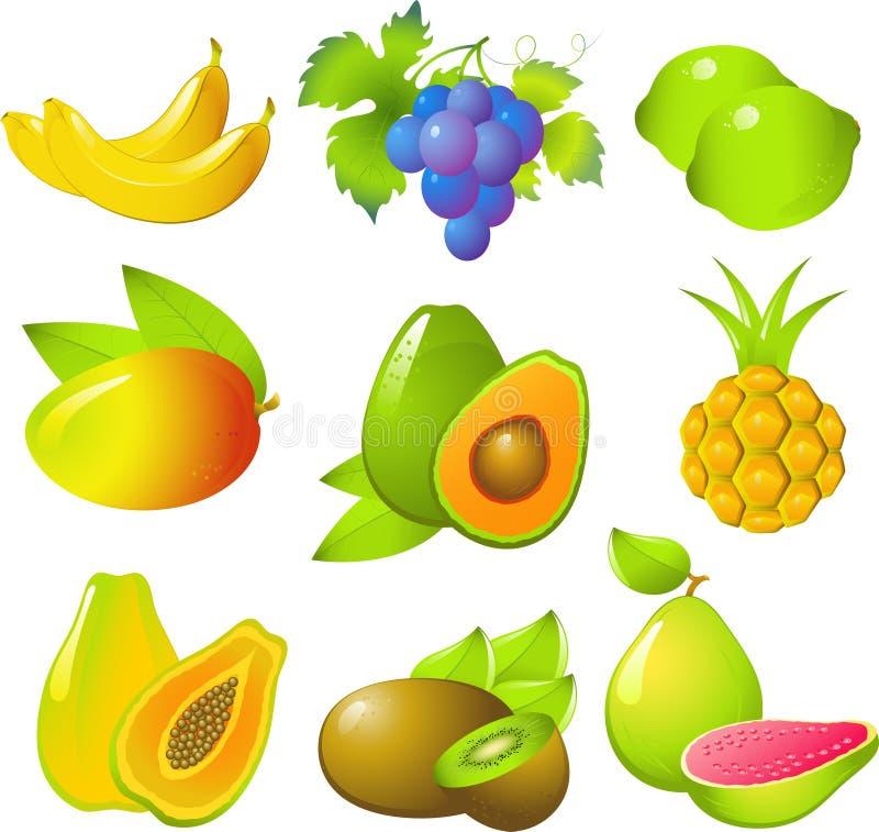 inställda exotiska frukter vektor illustrationer