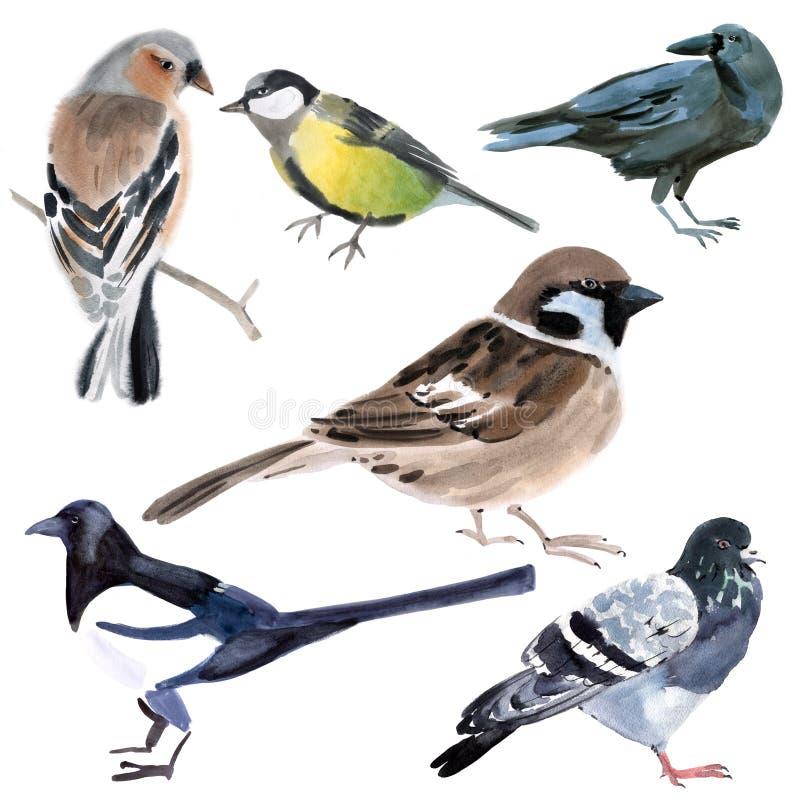 inställda fåglar Vattenfärgillustration i vit bakgrund vektor illustrationer
