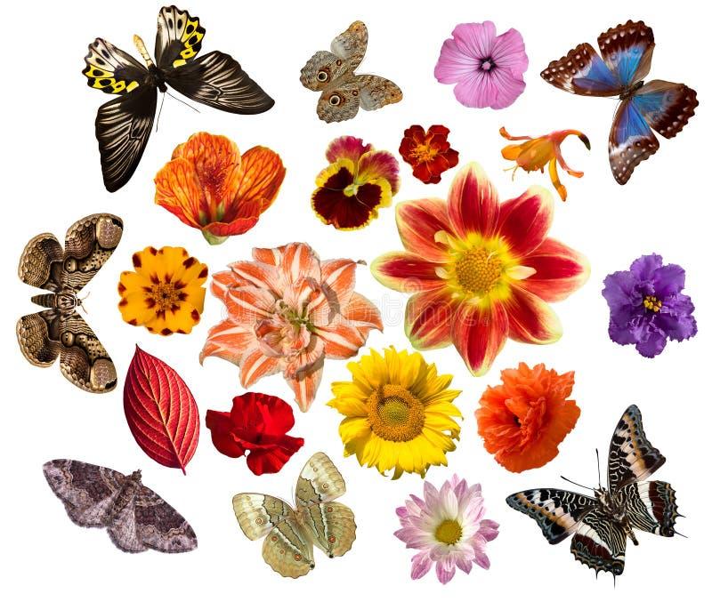 inställda fjärilsblommor arkivfoto