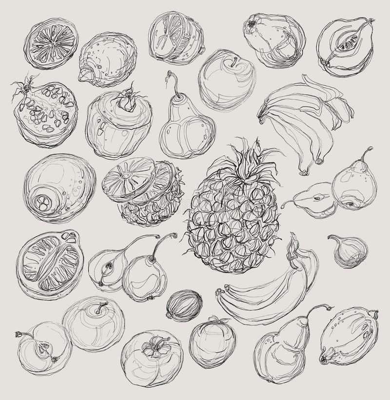inställda frukter stylized naturligt för teckningselement freehand vektor illustrationer