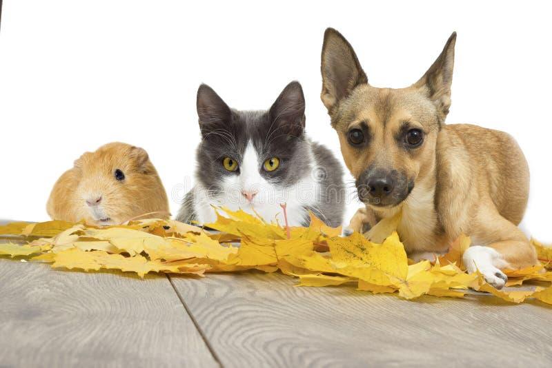 inställda husdjur arkivfoton