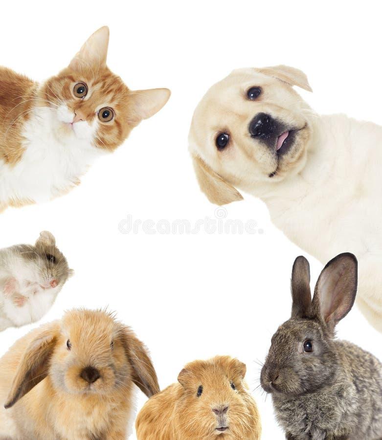 inställda husdjur royaltyfria foton