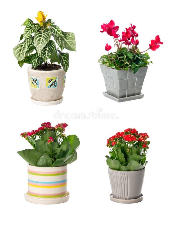 inställda inomhus växter för blomkrukar fotografering för bildbyråer