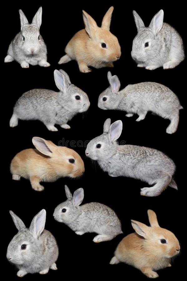 inställda kaniner fotografering för bildbyråer
