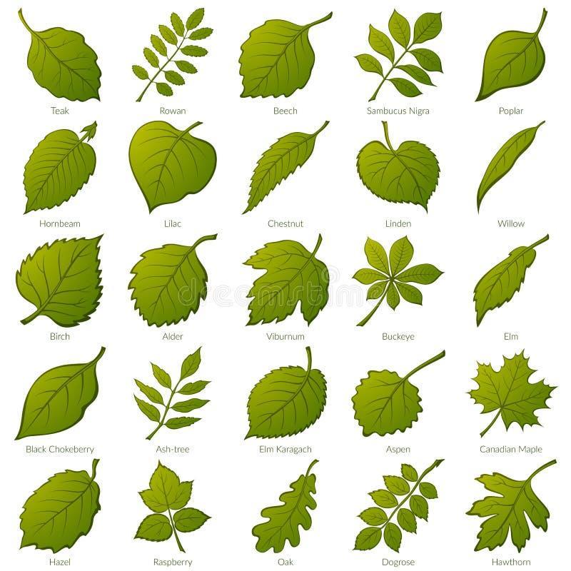 inställda leavesväxter stock illustrationer