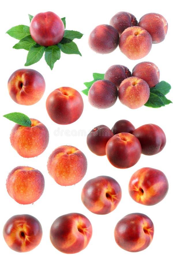 inställda persikor royaltyfri fotografi