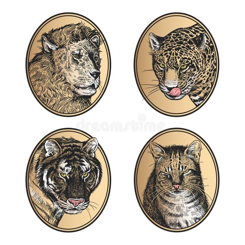 inställda symboler Afrikansk katt för däggdjurrovdjur lejon, tiger-, leopard- och husdjur vektor illustrationer